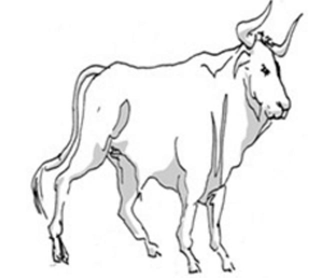 Taurus for November 2015