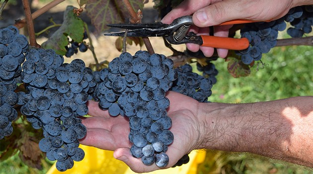 Hudson Valley Wineries Are Tapping into the Potential of the Cabernet Franc