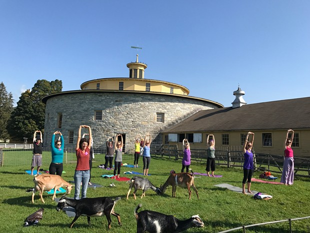 Yoga in the Pasture