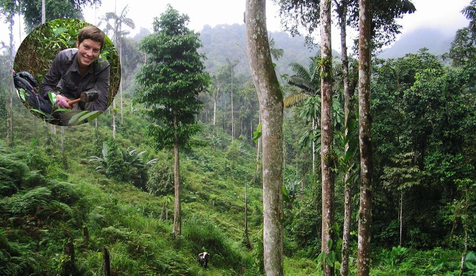 ev_batterman_forests.jpg