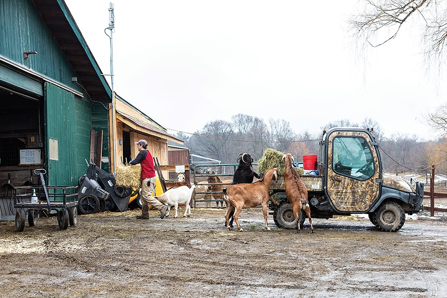 Catskill Animal Sanctuary has provided a home for over 5,000 farm animals rescued from cruelty, neglect and abandonment since it opened in 2001. CAS opens for public tours again on April 4. - PHOTO BY ANNA SIROTA