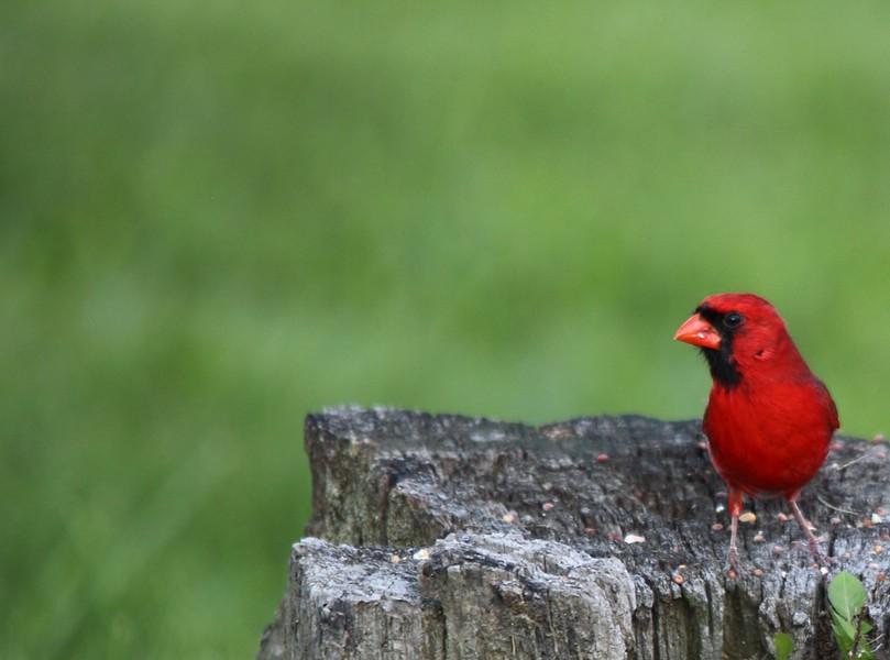 bird_language.jpg