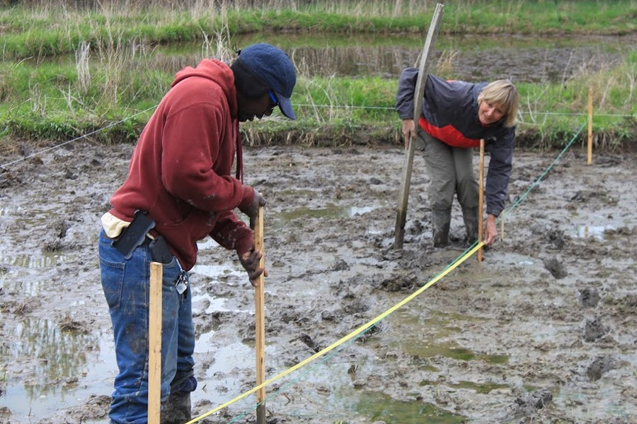 Hudson Valley rice farmers Nfamara Badjie and Dawn Hoyt at work in their Ulster Park rice paddy. Planting requires standing in the water. - COURTESY OF EVER-GROWING FARM