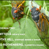 Nightlife Highlights: New Cicada Trio