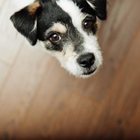Pets Underfoot? A Flooring Guide for Pet Owners