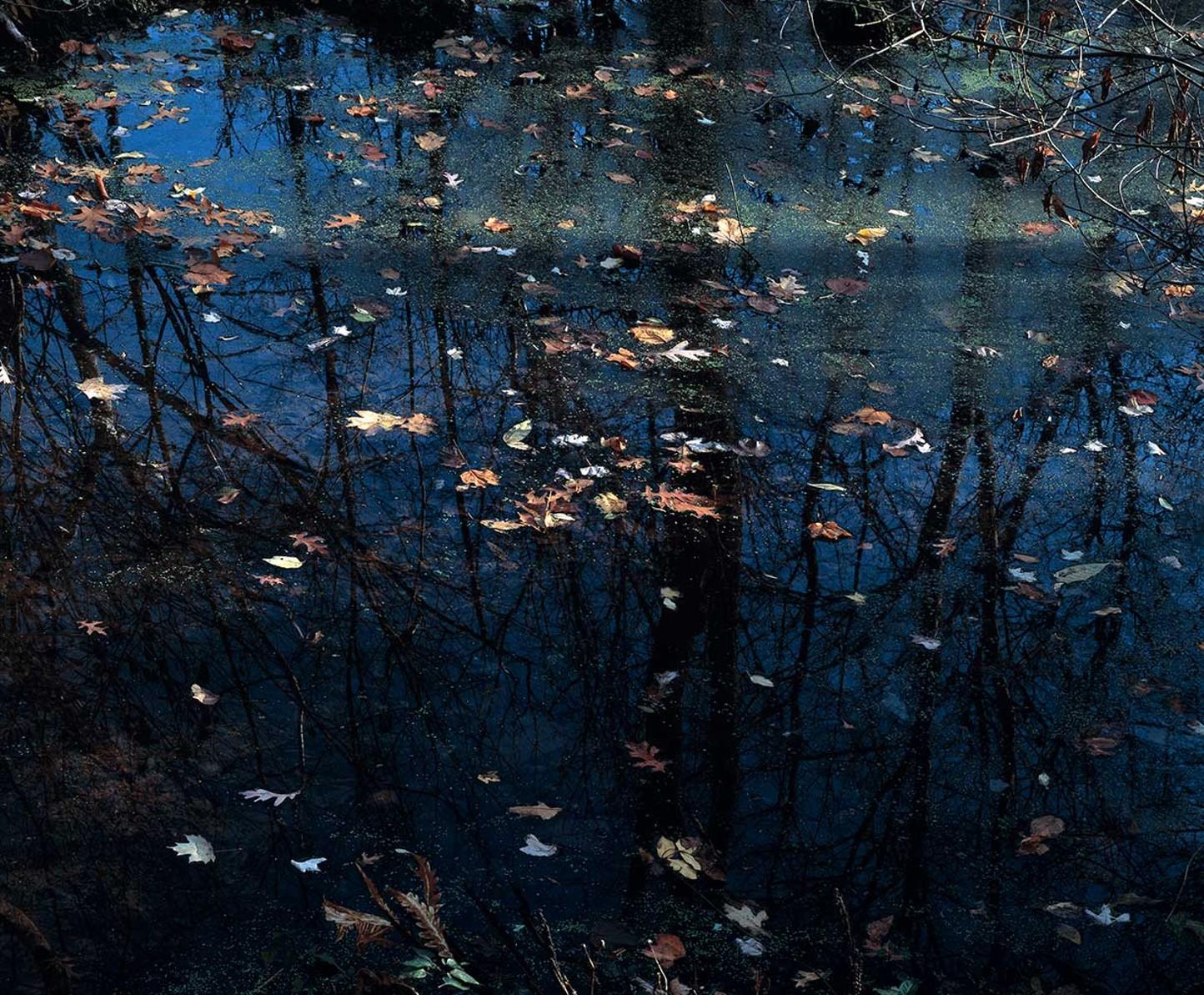 "Robin Dana's ""Watershed"" Series"