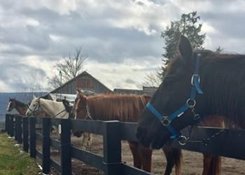 Kerhonkson Dude Ranch Reopens Memorial Day Weekend