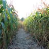 The Best Corn Mazes in the Hudson Valley