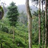 Restoring Resilient Tropical Forests @