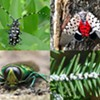 Saving Our Trees: Preventing Imported Forest Pests @