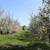 Angry Orchard Walk Tour and Cider Tasting @ Angry Orchard Cider House