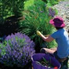A Water-Wise Teaching Garden for the Hudson Valley