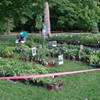 FW Vanderbilt Garden Annual Memorial Weekend Plant Sale @ Vanderbilt Garden Association Inc.