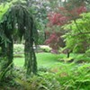 Open Days Program Garden Tour & Plant Sale: Poughkeepsie @ Dappled Berms - Garden of Scott Vanderhamm
