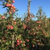Bicentennial Celebration & Pick Your Own @ Prospect Hill Orchards