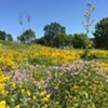 Garden Conservancy Open Day on August 4 Features Abeel Prairie House