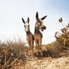 Farm Animals: Exhibit Featuring Photographer Shannon Greer @ Hudson Milliner Art Salon
