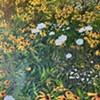 Anna Cypra Oliver: Leaf Color, Petal Shape @ 510 Warren St Gallery