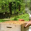 Beekeeping for the Future @ The Pfeiffer Center
