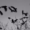 For The Love of Birds: A Photography Exhibit @ Cunneen-Hackett Arts Center