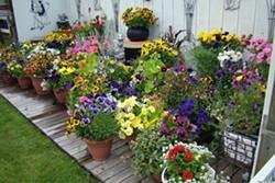 475e1608_gardening.jpg