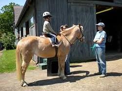 f3372a76_horse.1.jpg
