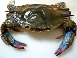 fd570658_soft-shell-crab.jpg