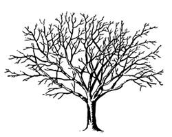 d13c431c_black-and-white-bare-tree-clipart-kcno4gacq.jpeg