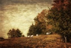 7689a323_grazing_sheep.jpg