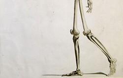730a9572_foot_bones.jpg