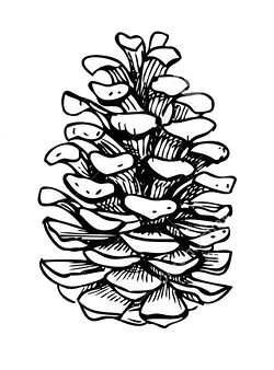 17f5faaa_vector-seamless-pine-cone-pattern-hand-drawn-illustration-63847508.jpg