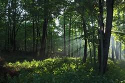 8ab5fe53_dhc_trees.jpg