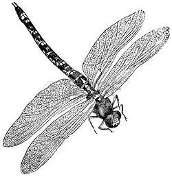 54d6a3f8_december_dragonfly.jpg
