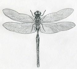 020466ff_dragonfly-drawings11.jpg