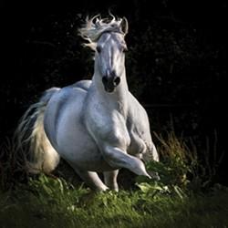840b9e03_uk_091317_light_white_horse.jpg