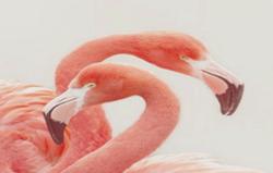 99c195d0_flamingos.png