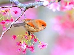 3f5b2357_bird.jpg