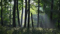 059dd955_forestry-walk.jpg