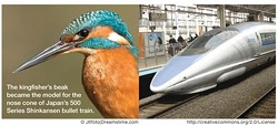 Kingfisher - Bullet Train - Uploaded by Mud Creek Environmental Learning Center