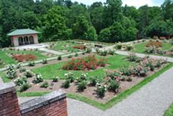 Rose Garden - Uploaded by Vanderbilt Gardens