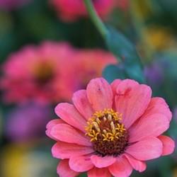 Farm fresh flowers - Uploaded by Andrea Giarraputo