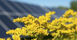 Solar arrays provide a protected habitat for bees - Uploaded by MarlainaH