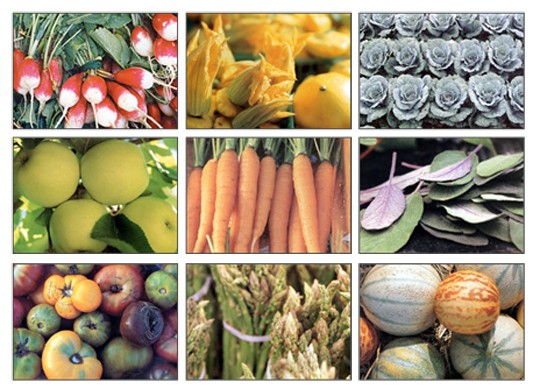 csa-farms.jpg