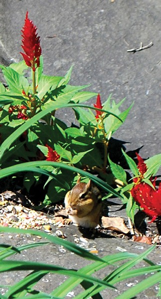 You can have chipmunks or crocuses, but not both. - LARRY DECKER