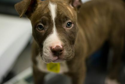 15 Adorable Pups Currently Up for Adoption at the Cleveland