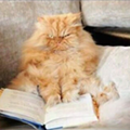 And Now, a Few Words From a Cat About Literature