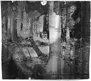 """Black Forest,"" by Bruce Checefsky, photograph."