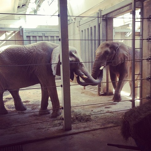 Clevelaaaaand! #elephants #zoo #cleveland - PHOTO COURTESY OF INSTAGRAM USER JFIELD524