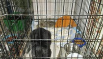 Cleveland APL Seizes More Than 100 Cats From Cat Crossing Shelter in Ohio City