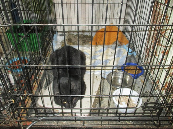 Cleveland APL Seizes More Than 100 Cats From Cat Crossing Shelter in
